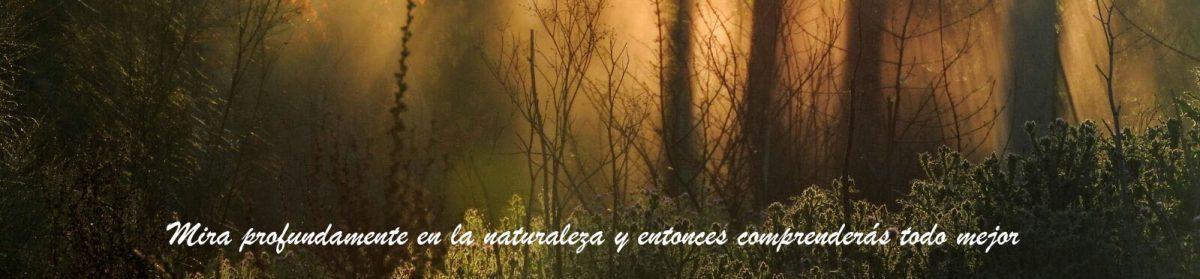 El entorno Meaques-Retamares